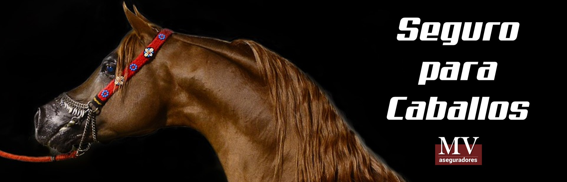 slider 1 para seguros de caballos