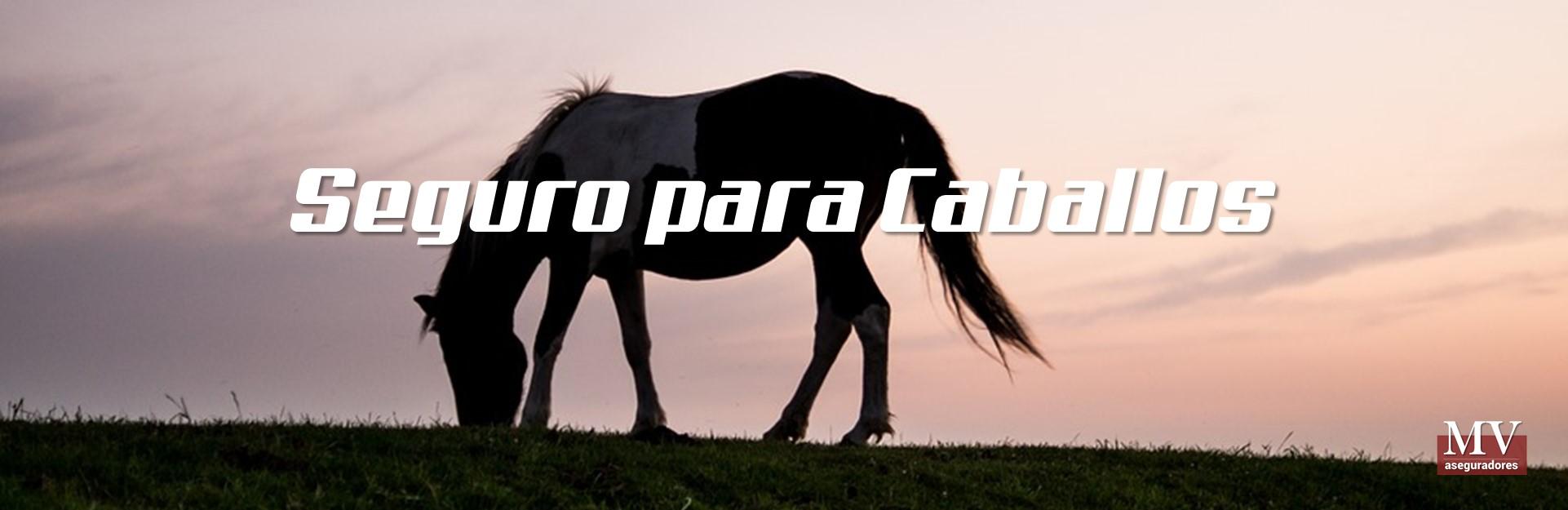 slider 3 seguro de caballos