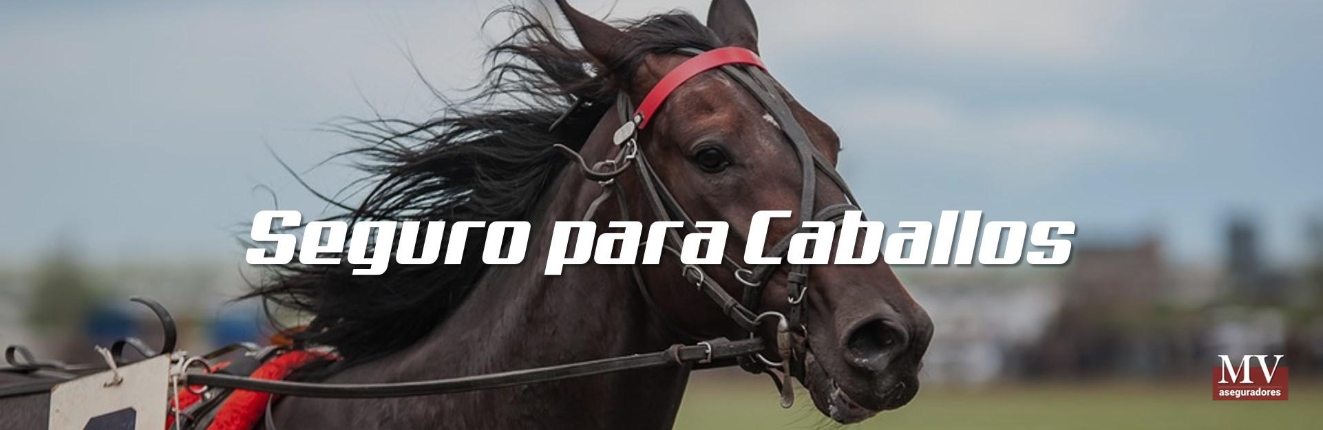 imagen 5 slider seguro de caballos