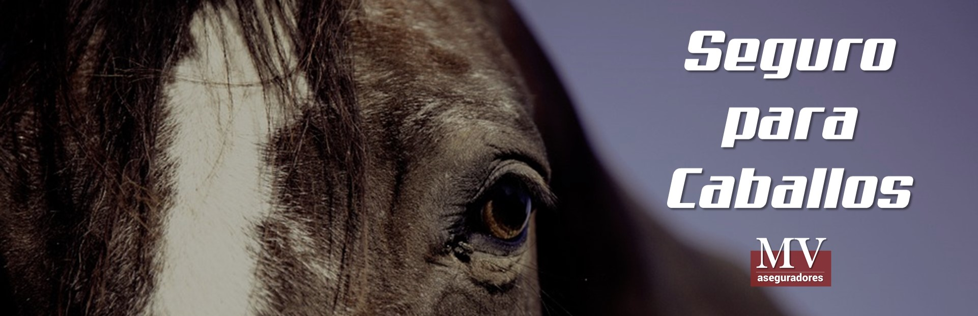 slider 6 seguro para caballos